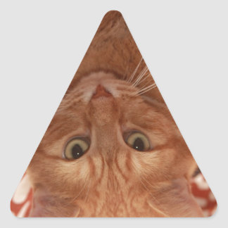Orange Tabby Triangle Sticker