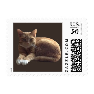 Orange tabby with white cat postage