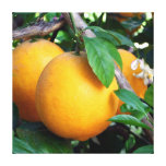 Orange - Tangelo Stretched Canvas Print