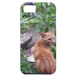 Orange Tiger Cat Garden iPhone 5/5S Cases