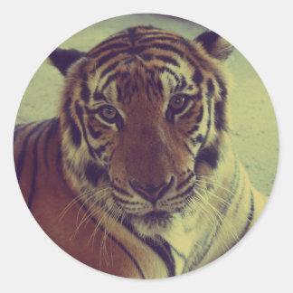 Orange Tiger Classic Round Sticker