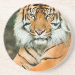 Orange Tiger Coaster