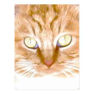 Orange Tiger Kitty Postcard