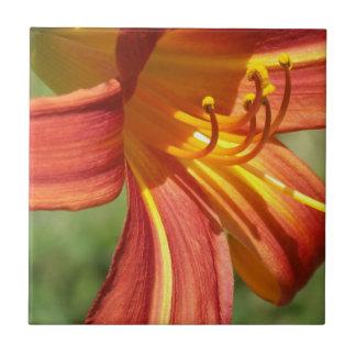 Orange Tiger Lily Ceramic Tile