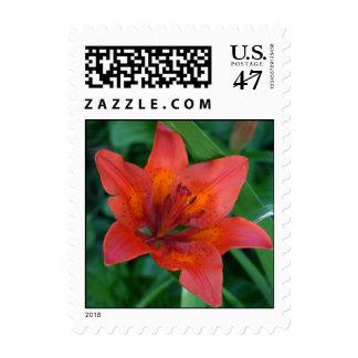 Orange Tiger Lily colorful flower postage stamps