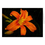 Orange Tiger Lily Flowers Greeting Card