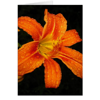 Orange Tiger Lily Flowers Greeting Cards