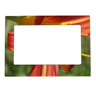 Orange Tiger Lily Magnetic Picture Frame