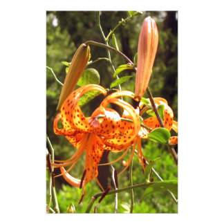 Orange Tiger Lily Customized Stationery