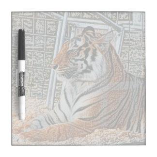 Orange tiger looking right sitting up sketch image dry erase board