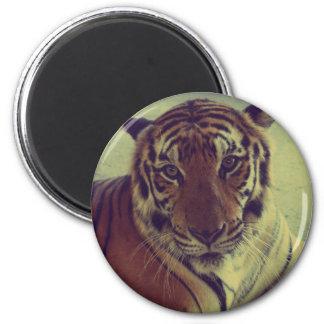 Orange Tiger Magnet