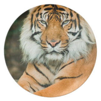 Orange Tiger Plate