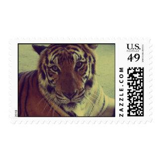 Orange Tiger Postage Stamp