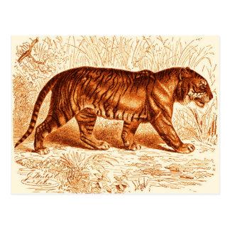Orange Tiger Postcard
