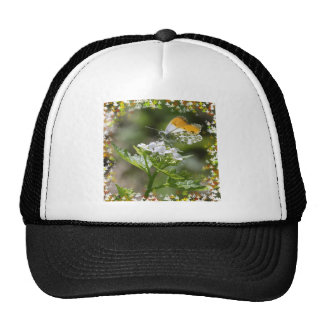 Orange tip butterfly in a leaves frame mesh hat