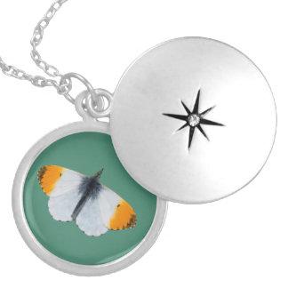 Orange tip butterfly round locket necklace