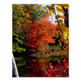 Orange Tree Fall Foliage Photography Poster
