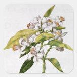 Orange tree flower, from 'La Guirlande de Julie' Square Sticker