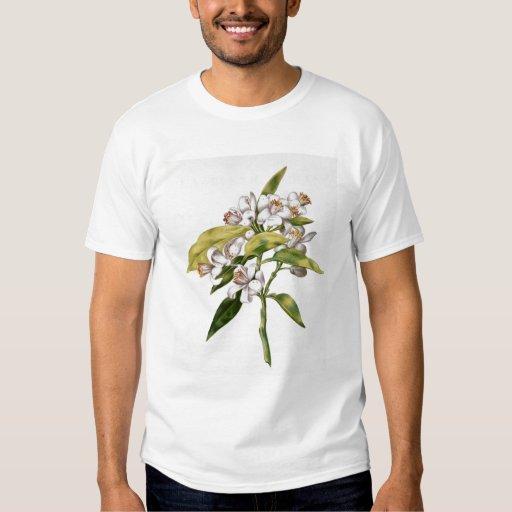 Orange tree flower, from 'La Guirlande de Julie' T-shirts