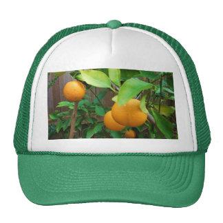 Orange Tree Hat