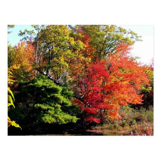 Orange Tree in Fall Postcard