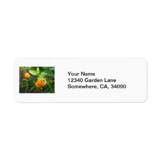 Orange Tree Label