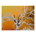 orange tree poster