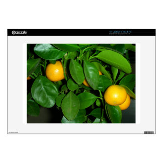 Orange tree decals for laptops