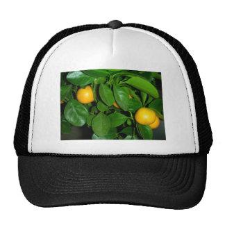 Orange tree trucker hat