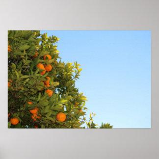 Orange Tree with Oranges Poster