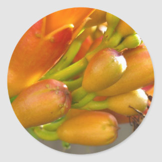 Orange Trumpet Flower with Bee Sticker