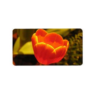 Orange Tulip Address Card Personalized Address Labels