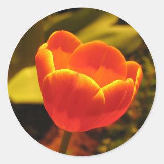 Orange Tulip Classic Round Sticker