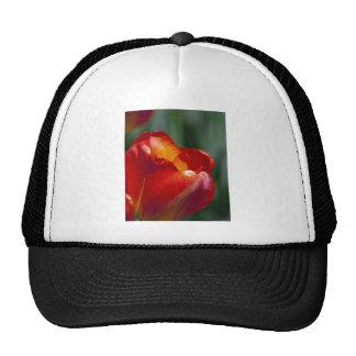 Orange Tulip Closeup Mesh Hat
