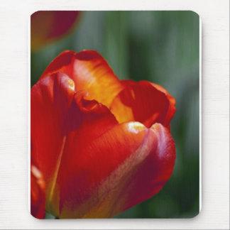 Orange Tulip Closeup Mouse Pad