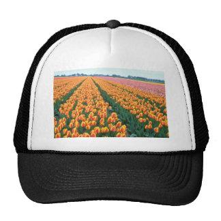 Orange Tulip fields, Holland flowers Hats