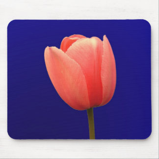 orange tulip flower in blue background mouse pad