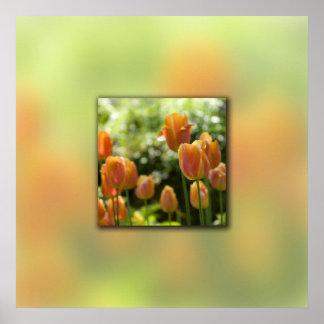 Orange Tulip Flowers Poster