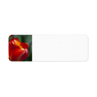 Orange Tulip Custom Return Address Labels