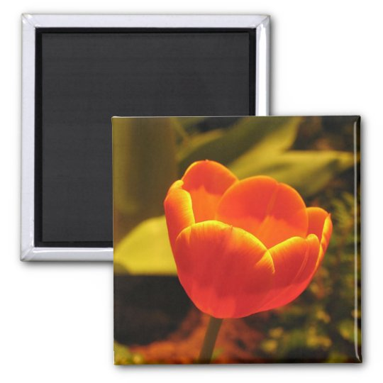 Orange Tulip Magnet