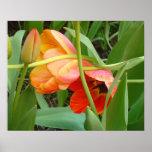 Orange Tulip Sculpture Poster