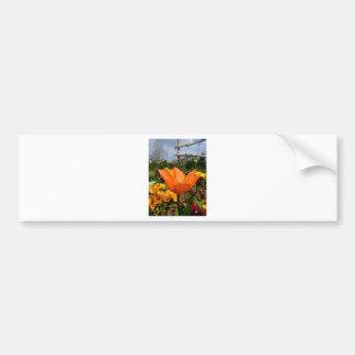 Orange Tulip with grey clouds ! Bumper Sticker