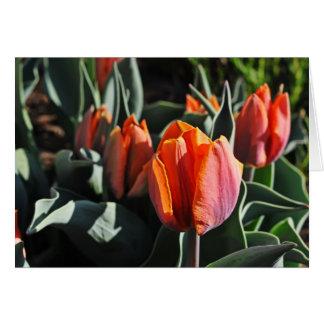 Orange Tulips 1 Card