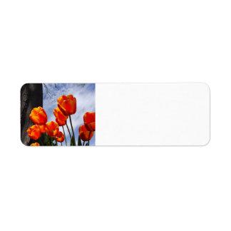 Orange Tulips 2 Return Address Label