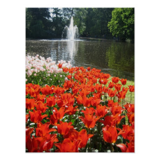 Orange tulips and fountain poster