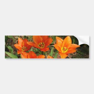 Orange Tulips Bumper Sticker