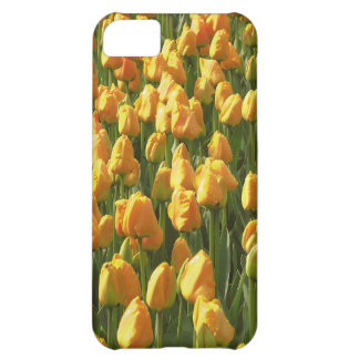Orange Tulips iPhone 5C Cover
