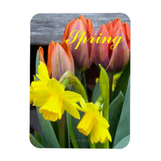 Orange Tulips Daffodils Magnet