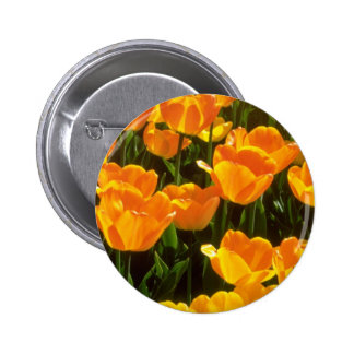 Orange Tulips flowers Buttons