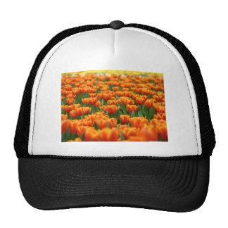Orange Tulips Trucker Hat